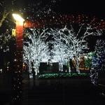 竹田 すっかり冬の風物詩「京セラのイルミネーション」【イベント】