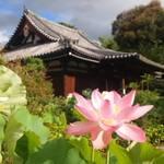 京都 蓮の花を愛でよう 見どころ4選【まとめ】