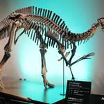 京都水族館と恐竜たちがコラボする!【イベント】