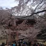 醍醐 シーズン真っ只中。秀吉も愛した桜満開の世界遺産「醍醐寺」