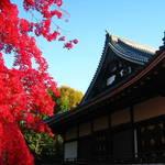 紅葉特集⑦ 世界遺産で紅葉と寒桜の夢の共演!御室・仁和寺【観光】