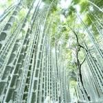 立ち尽くすほどの美しさ!嵐山・嵯峨野エリア「竹林の小径」【まとめ】