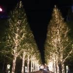今年もやってきました!美しい並木道が魅力的!市内最大級「ロームのイルミネーション」【イベント】