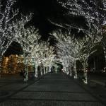 1998年から続く毎年恒例の風物詩「京セラのイルミネーション」約20万個のLEDが織りなす幻想的な空間【ライトアップ】
