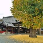 四条 なぜか落ち着く空間、お寺の中のCafe D&DEPARTMENT KYOTO【和カフェ】