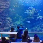京都駅からすぐ近く!「京都水族館」で愛くるしい姿に癒される