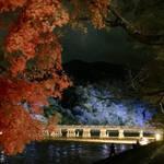 嵐山周辺*初冬の風物詩「京都・嵐山花灯路」12/20まで開催中【ライトアップ】