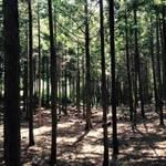 亀岡*今年もイベント盛りだくさん!マルシェも楽しい「ムラタの森 手づくり市」10/31開催【イベント】