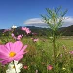 ランニングのススメ*お気に入りコース①風光明媚な広沢池〜嵐山周辺【約10km】