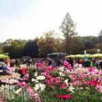 【恋する北山④】京都府立植物園秋の無料開放に行ってきた⇒次回は11月23日!【イベント】