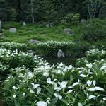 祇園 建仁寺内の「両足院・半夏生の庭」は今が盛り!必見です!