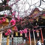 北野天満宮で絶賛「梅苑」開催中!50種約1500本という京都屈指の梅が最高潮の見ごろ!