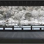 【世界遺産】雪積もる風景が凛としてよし。【冬の天龍寺】