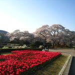 【京都桜特集】予習第4弾!ファミリーやカップルに最適☆植物園~半木の道~京都御所