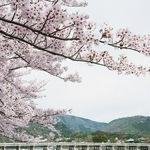 日本の名勝「嵐山」にももうすぐ春が!商店街ではライトアップも実施中!