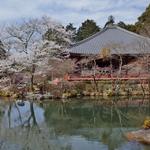 京都を代表する桜の名所「世界遺産 醍醐寺」三宝院のお庭は撮影OKに!