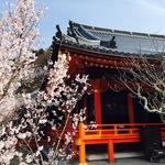 【絶賛開花中】観桜会あり食事処もあり!桜の名所「毘沙門堂」【山科】
