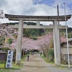 【京都山科】お稲荷さん東の麓。参道のソメイヨシノの美しい「大石神社」