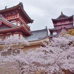 伏見桃山城、酒蔵、宇治川派流沿い、桜満開の伏見界隈をまとめてご紹介!【まとめ】