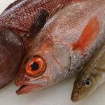 大将がその日一番の魚を競り落としてきます!旬な魚が自慢!「舞鶴魚料理 魚源」