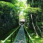 【京都大徳寺】新緑スポットなら絶対ココは押さえるべき!緑と一体になれる異次元空間「高桐院」【観光】