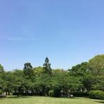 生命力溢れる新緑が美しい「八幡市のさくら公園」春はさくらがきれいな穴場です。