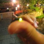 【祇園巽橋】今年は2週間早め!京都の風情あふれる祇園白川で乱舞するホタル発見!!【初夏の風物詩】