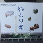 【京都大学総合博物館】今注目の特別展!眠りについて考える「ねむり展 眠れるものの文化誌」に行ってきました!