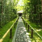 竹林、青紅葉、苔に覆われたどこまでも続く緑色の世界に、身も心も癒されました「高桐院」