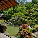 紫陽花の見頃が間近!東山随一の庭は必見!「智積院(ちしゃくいん)」@東山七条