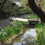 【京都季節の花】花菖蒲が見ごろ!南禅寺界隈の数寄屋造りの別邸「野村碧雲荘」