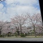 満開の桜を眺めながら、ちょっとづつ色々なお料理が楽しめちゃうランチ♪「カフェ メメントモリ」