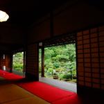 【穴場】梅雨を涼しく過ごそう!半夏生の咲く足利家の菩提寺【等持院】