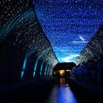 【夏の風物詩】幻想的な光の天の川!願いを京都の夏の空に!「京の七夕 堀川会場」