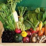 今年も感謝祭開催!西院・リノホテル京都「リノのカーニバル」で新鮮野菜やフルーツをお得にGET【10/1】