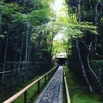 【最新】リアルな京都紅葉情報!新緑の青竹に際立つ紅葉グラデーション!!「大徳寺高桐院」