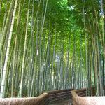 【京都嵐山】竹林の新名所出現!紅葉時期にあえて新緑の竹林へ☆彡「竹林の散策路」
