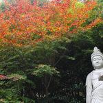 これからが紅葉の見頃!北嵯峨の竹林に佇む「直指庵(じきしあん)」で心洗われるひとときを