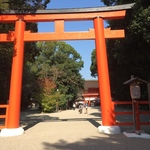 【最新】タイムリーな京都紅葉情報!世界遺産・糺の森の紅葉待ち遠しい☆「下鴨神社」