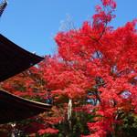 壮大なスケールの紅葉は感動的な美しさ!!山全体が紅葉していて絶景が楽しめます!「善峯寺」