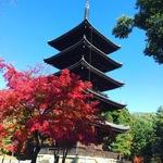 【京都御室】紅葉はまさに最高潮!広大な敷地に圧巻の世界遺産・仁和寺