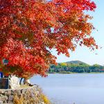 今が紅葉の見頃!広い空が気持ちいい「広沢池」周辺を散策してみました【紅葉】