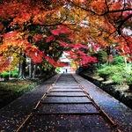 雨上がりが狙い目の京都紅葉絶景スポット!23日の最盛期はもみじまつりも実施「毘沙門堂」