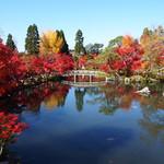 京都屈指の紅葉の名所「もみじの永観堂」は圧倒的な美しさ!!