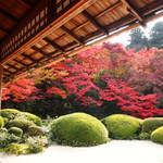 サツキの緑と真っ赤な紅葉の美しいコントラストのお庭は必見です!!一乗寺の「詩仙堂(しせんどう)」