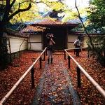 【京都大徳寺】赤い宇宙が間もなく完成します!やっぱり人気の絶景紅葉スポット☆「高桐院」