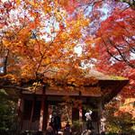 仏教の理想郷 常寂光土のような趣きのお寺で美しい散紅葉を堪能「常寂光寺」