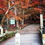 京都の紅葉絶景スポットの驚愕の珍風景!もうシーズン終盤☆「毘沙門堂」【京都山科】