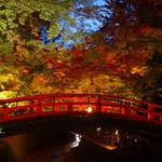 紅葉のライトアップも美しい~!!豊臣秀吉が築いた御土居と250本もの紅葉が織りなす絶景!北野天満宮