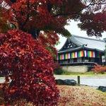 2016京都名残りの紅葉ラストパトロール!紅葉濡れる名所めぐり☆南禅寺~安楽寺~法然院~智積院~養源院